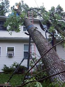 Portable Tree Jack   Tree Hugger